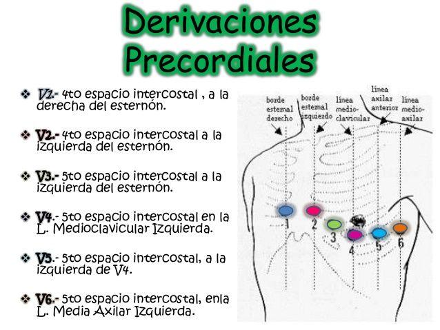 Resultado De Imagen Para Derivaciones Precordiales Notas De Enfermería Anatomia Humana Huesos Fisiología