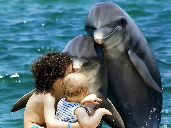 Very sweet embrace ♥: Sea Life, Sweet, Funny Pictures, Dolphins, Animal Friends, Families Photos, Adorable, Funny Animal, Pictures Day
