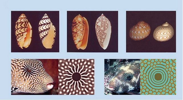 How do patterns develop in nature? How do digits develop on a limb? ~ Hox genes are the answer.