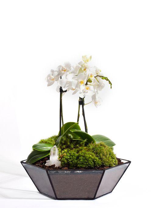 Orchid, Moss & Crystal Quartz Wide Jewelled Garden Terrarium