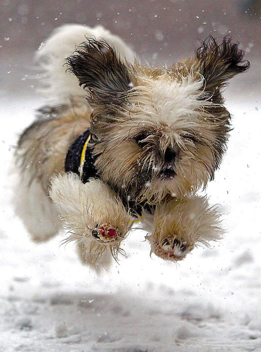 My dog actually does this in the snow!