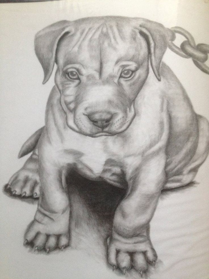Pitbull dog drawings in pencil - photo#17