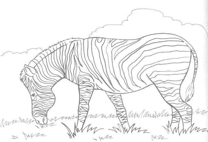 Cute Coloring Pages Zebra Zebra Coloring Pages Cute Coloring Pages Animal Coloring Pages