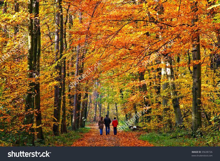 Walking Through Autumn Park Stock Photo 35638726 : Shutterstock