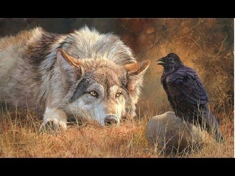 Love and Relation With Wild Animals - Full Documentary P.2     VIA: YOU TUBE