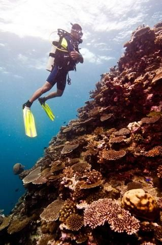 Top 10 Destinations To Scuba Dive  Whether you're a scuba pro or looking for the perfect spot to take your first dive, check out this PADI vetted travel guide for where to go.