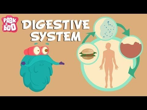 Digestive System | The Dr. Binocs Show | Learn Videos For Kids - YouTube