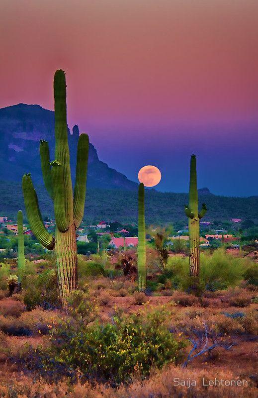 Moon and Saguaro Cactus, Arizona