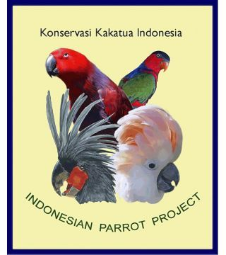 Indonesian Parrot Project - Abbotti Cockatoo