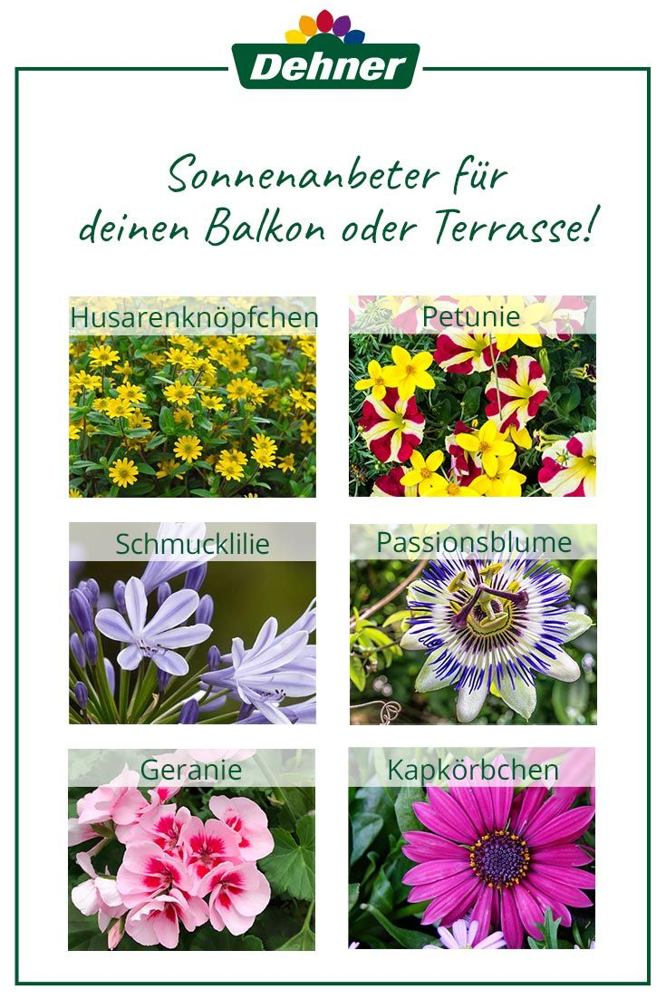 Sonnenanbeter Fur Balkon Oder Terrasse Balkon Pflanzen Sommerblumen Sommerblumen Balkon