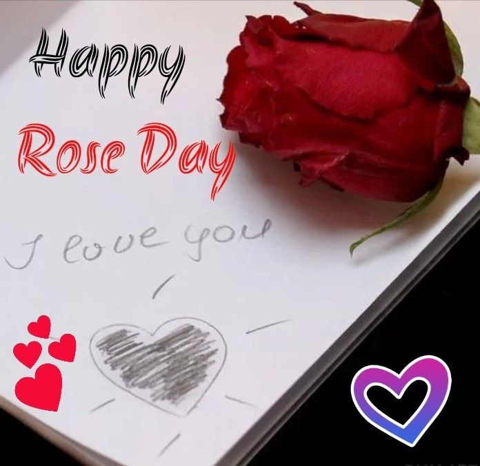 Rose Day Happy Rose Day 2020 Images Special Day Valentine Week Happy Valentine S Day 2020 In 2020 Happy Valentines Day Purple Roses Images Dark Purple Roses
