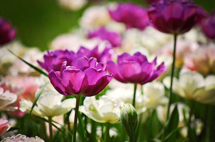 Virágok (Vácrátót)