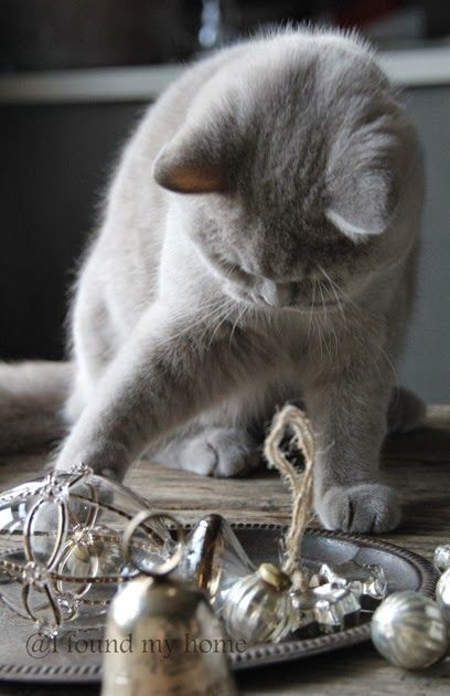 Curious and playful cat playing with Christmas ornaments.
