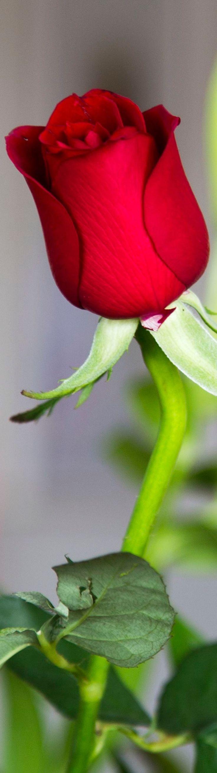 1360 best Fantastic Flower Ideas images on Pinterest   Flowers ...