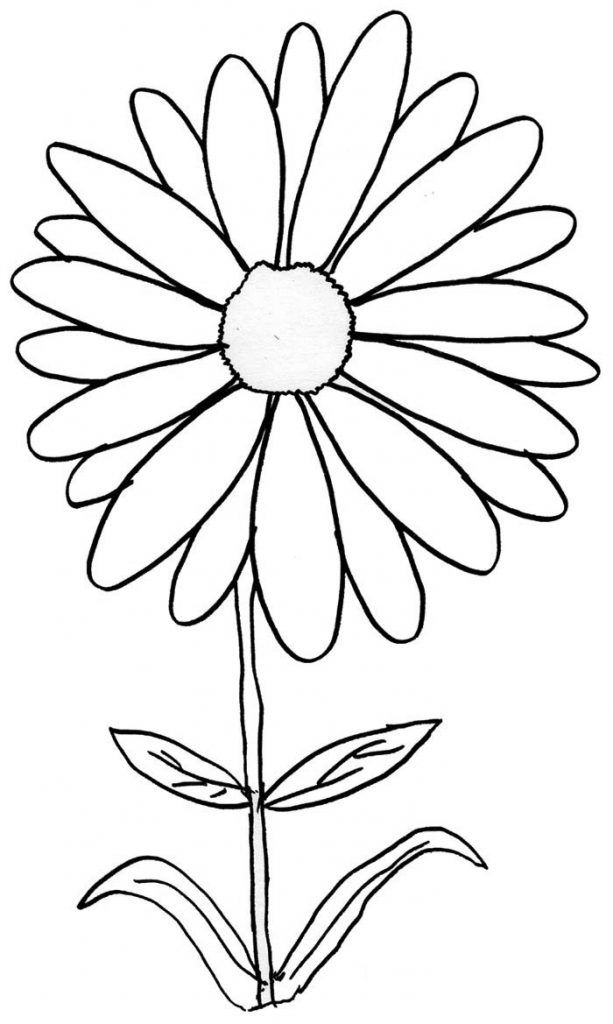Daisy Coloring Pages Best Coloring Pages For Kids Flower Coloring Pages Flower Drawing Daisy Drawing