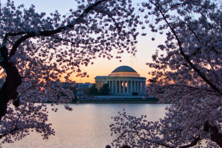 Jefferson memorial across the tidal basin with cherry blossoms.
