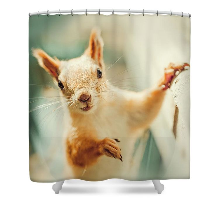 Cute Shower Curtain featuring the photograph Cute Squirrel by Oksana Ariskina for children and kids. Cute and funny wild animals! #OksanaAriskina #Squirrel #WildAnimal Available as poster, greeting card, phone case, throw pillow, framed fine art print, metal, acrylic or canvas print with my fine art photography online: www.oksana-ariskina.pixels.com