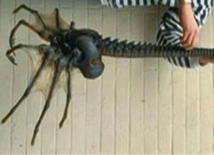 A series of images allegedly show a giant sea spider discovered in Antarctic waters. Are these photos real or fake?