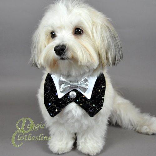 bow for dog tuxedo | HOME > Dog Tuxedos > Black Velvet Dog Tuxedo w/ Silver Bow Tie