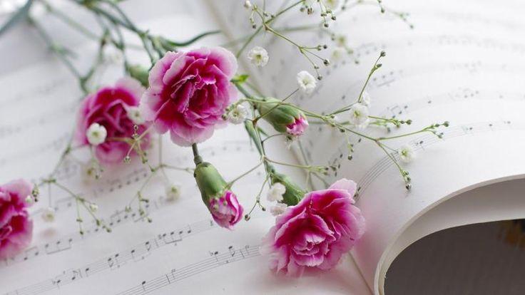 Pink Wild Carnation