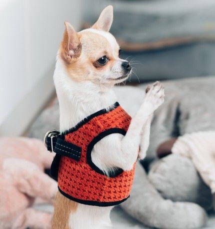 Harnais pour petit chien - SOHO Orange