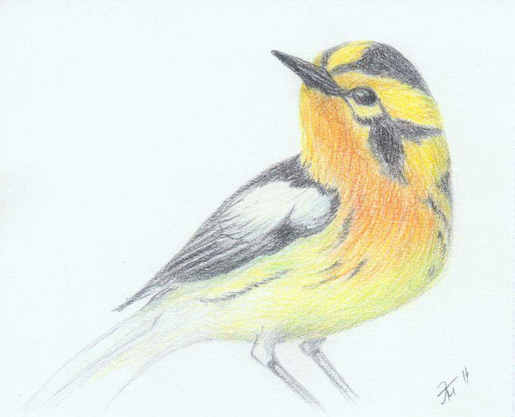 Elzati (Ольга Удовенко) - птица. Цветные карандаши