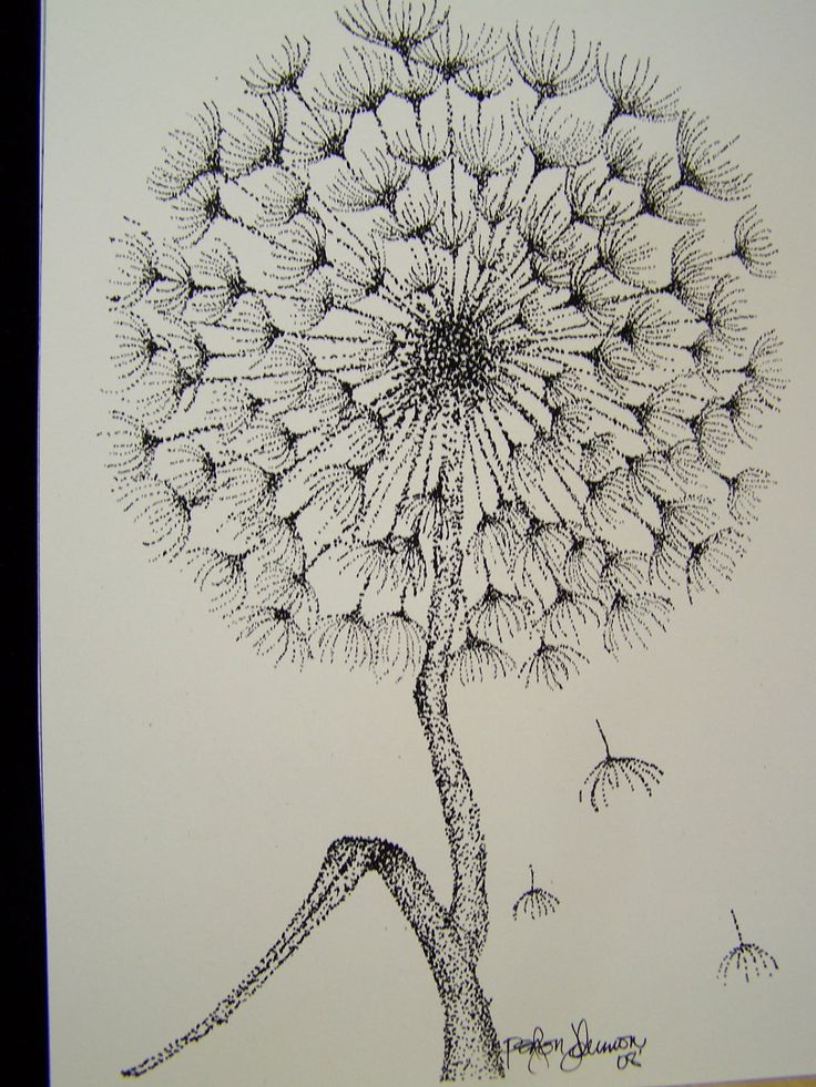 how to draw a dandelion step by step
