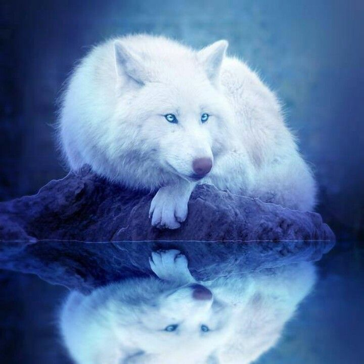 Heather was resting near the lake. Suddenly she herd a boom and a crack. *Oh No the humans are back again* she thought and let out a warning Howell to the other wolfs.