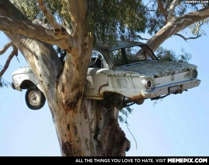 A falcon nesting in a tree!  And for those not car savy, the car in the tree is a ford falcon :P