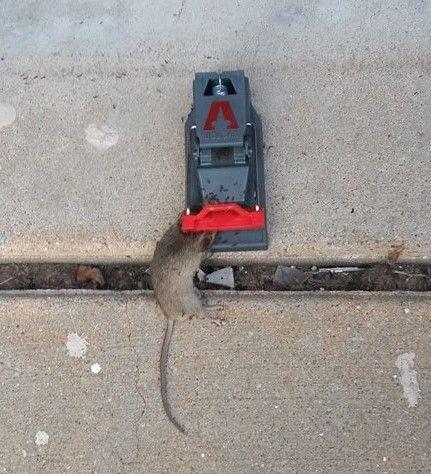 18 best Gotcha images on Pinterest Mice control Mouse traps