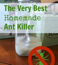 Homemade Ant Killer,works for roaches also.