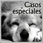 Ciudad Animal - Refugio de animales abandonados | adoptar un perro, adoptar un gato