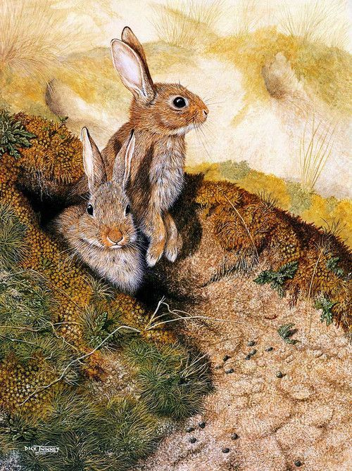 """Dick Twinney  """"This picture reminds me of WATERSHIP DOWN, one of my all time favorite books!""""  S."""