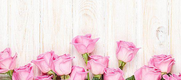 Rózsaszín rózsa háttér