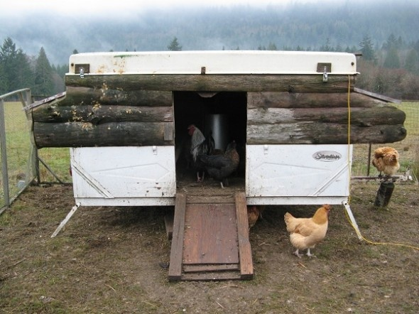Old PopUp Camper Turned Hen House For the Animals