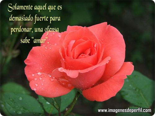 Frases De Flores: 214 Best Images About FLORES A TI... On Pinterest