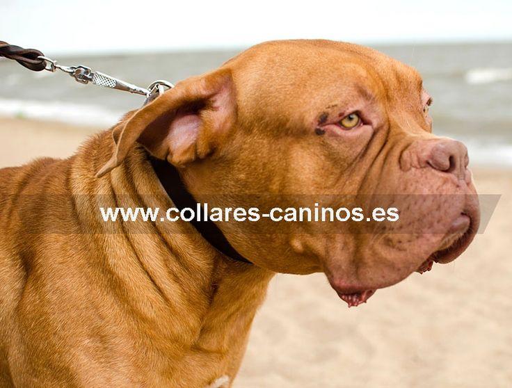 """#Collar de #adiestramiento Dogo de Burdeos - >  13,00 € @fordogtrainers.es No dejes de pulsar """"me gusta"""""""