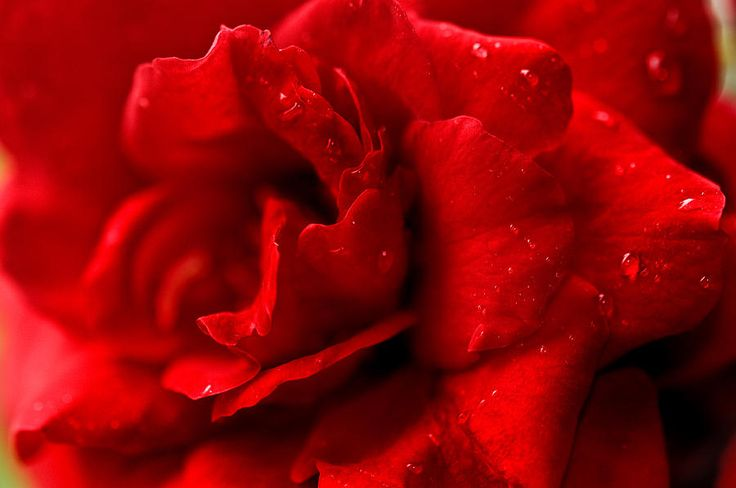 Passion For Flowers. Sensual Petals by Jenny Rainbow