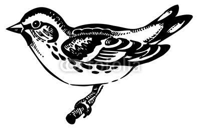 Fototapeta Czyżyk ptak, ręcznie rysowane ilustracji
