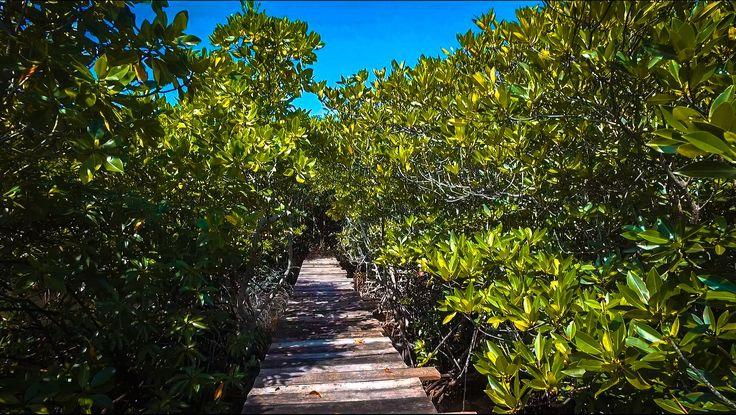 Tracking mangrove villa sunset karimunjawa
