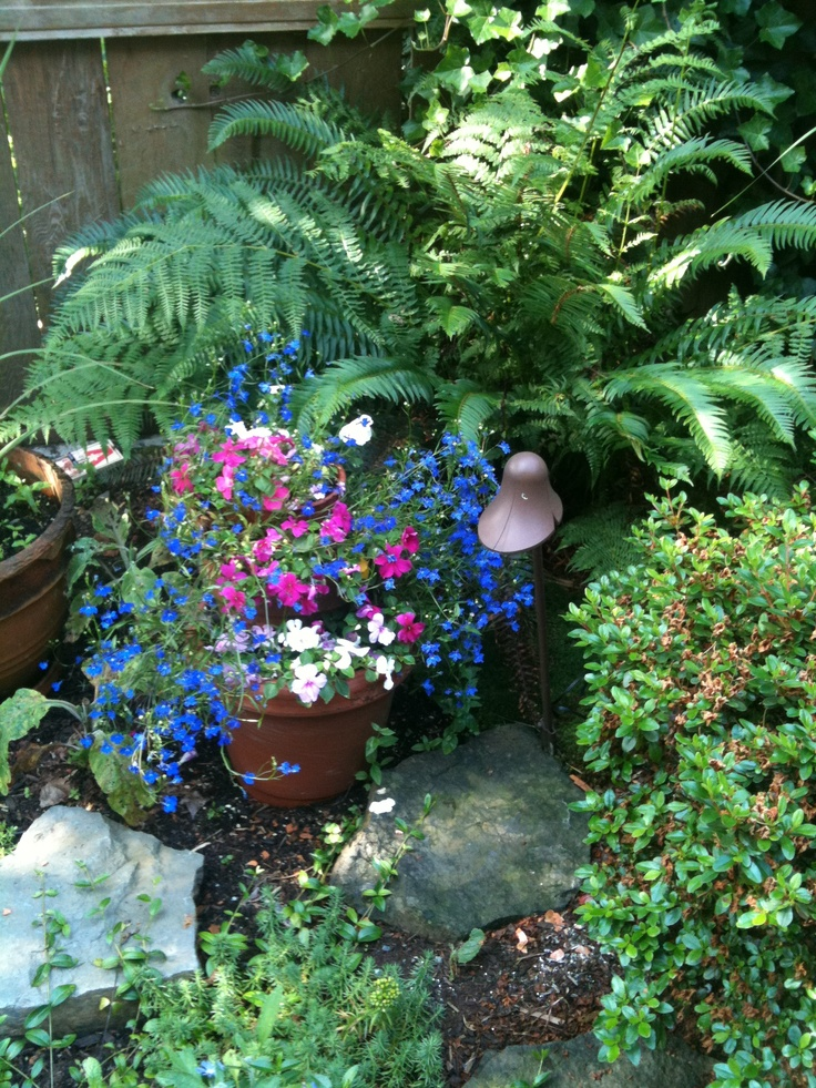 impatience and lobelia under the ferns