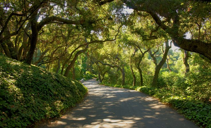 17 Best Images About Descanso Gardens On Pinterest Canada Los Angeles Area And Cas
