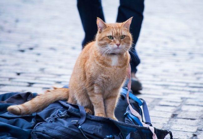 15 добрых фильмов, которые смогут вернуть веру в лучшее Уличный кот по кличке Боб