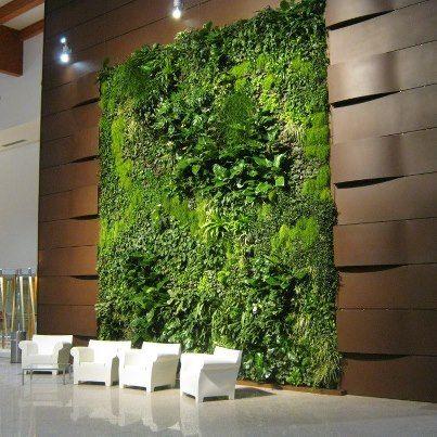 Vertical indoor garden. #greenwall #verticalgarden #green