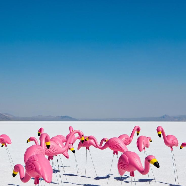 RIP Don Featherstone. It's quite fitting that he passed away the day before National Pink Flamingo Day...