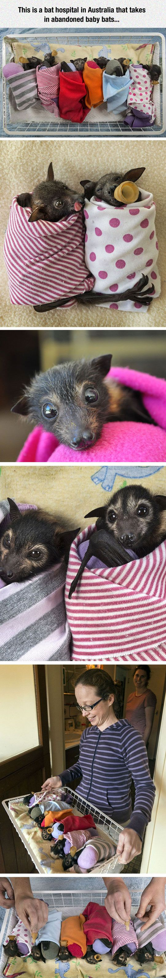 These baby bats are surprisingly cute. If you only saw their faces, they look like puppies.