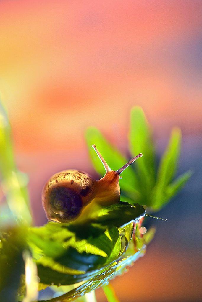 https://flic.kr/p/svhyBW | Snail morning