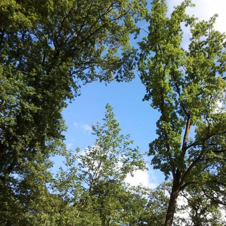 8 augustus 2013. Vanmorgen rekte ik me na het hardlopen in het bos eens lekker uit en zag dit omgekeerde hart in de lucht. #lichtpuntje