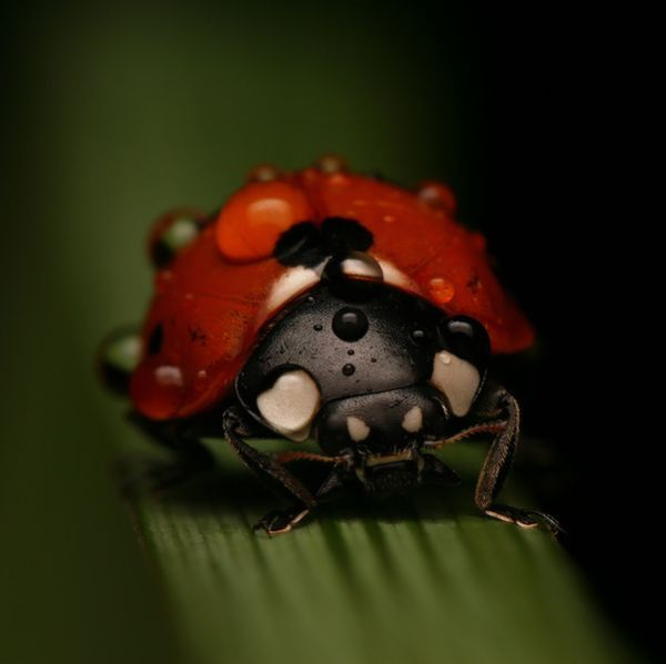 how to get rid of ladybugs from house