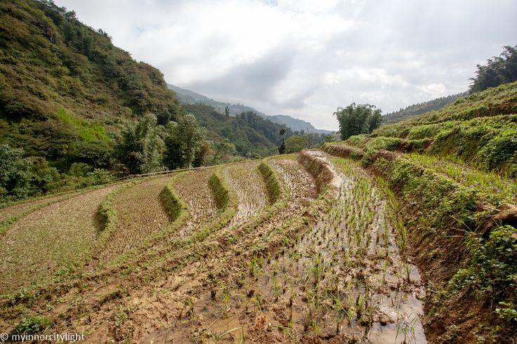 #vietnam #sapa #asia #ricefields #myinnercitylight